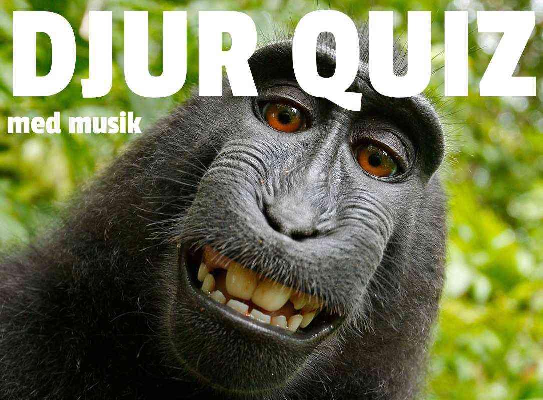Djur Quiz